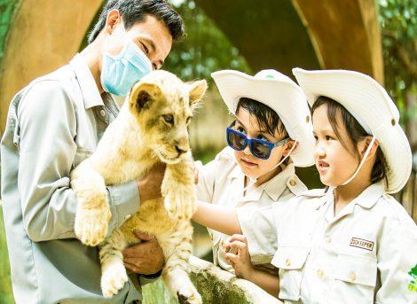 Kinh Nghiệm Đi Safari Phú Quốc Review Tham Quan Vườn Thú Chi Tiết