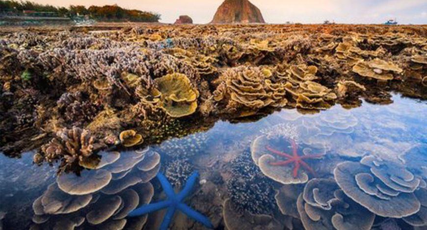 Tour Câu Cá Và Lặn Ngắm San Hô Du Lịch Phú Quốc Nửa Ngày